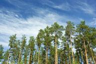 Canvas-sisustustaulu Suomalaista metsää 1500