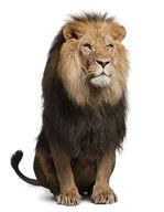 Canvas-sisustustaulu Suuri leijona 1616