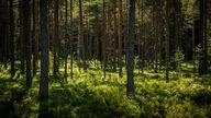 Canvas-sisustustaulu Suomalaista metsää 2144