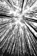 Canvas-taulu Puita metsässä MV 2882