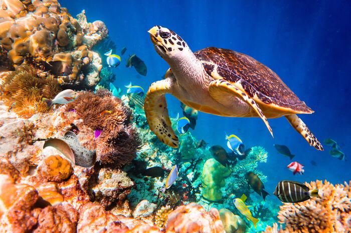 Merikilpikonna