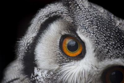 Pöllön Silmä